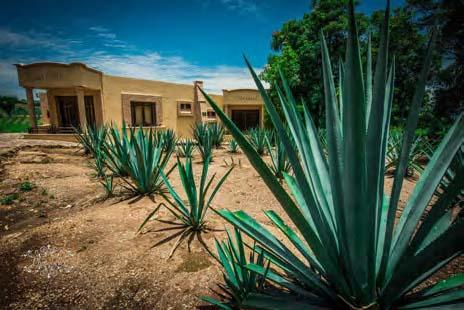 Valorizazione e catalogazione delle risorse naturali e culturali della Ruta del Tequila